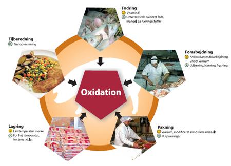 Oxidation - Teknologisk Institut